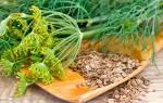 Как применяются семена укропа в лечении поджелудочной железы?