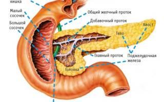 Выводные протоки поджелудочной железы