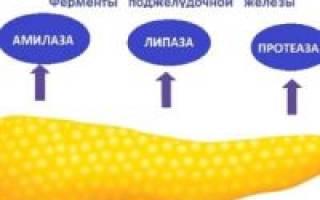 Какие ферменты вырабатывает поджелудочная железа?
