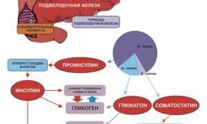 Какие функции выпоняет поджелудочная железа в организме