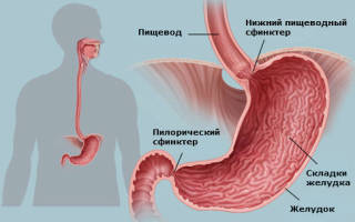 Причины возникновения и признаки непроходимости желудка