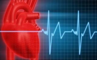 Какова главная функция гастрина в организме человека?