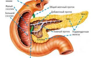 Особенности строения поджелудочной железы