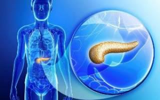 Какие размеры поджелудочной железы по УЗИ считаются нормой у взрослых?